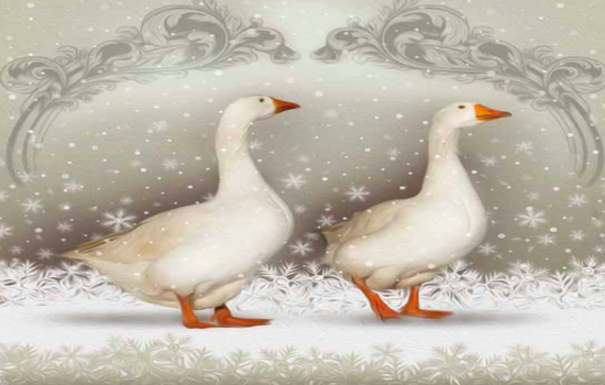 Christmas Cards - on sale now!